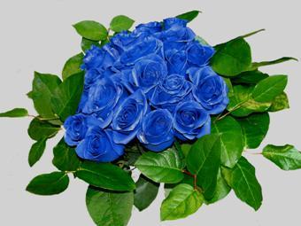сини рози